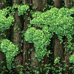 Head of a global index and data provider says green investment is now on par with investment in the emerging markets.